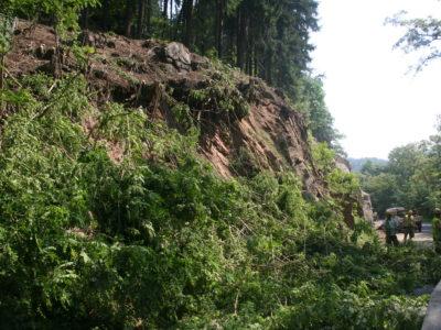 Odstranění náletových dřevin